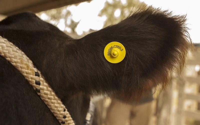 Resolución 257-E/2017 Sistema de Identificación Animal